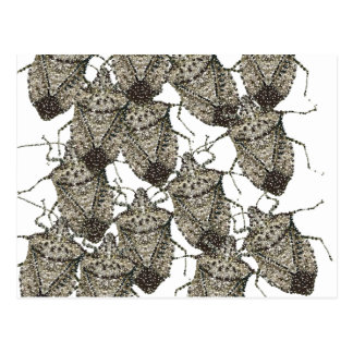 Stink Bugs bedazzled Postcard