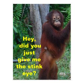 Stink Eye Animals Showing Emotions Postcard