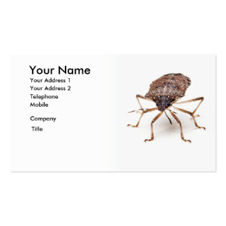 Stink or Shield bug for pest exterminator Double-Sided Standard Business Cards (Pack Of 100)