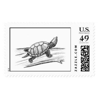 Stinkpot Turtle   Postage Stamp