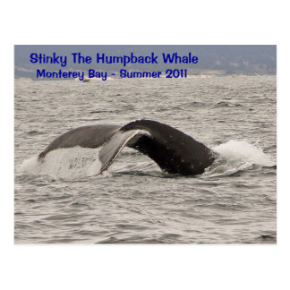 Stinky The Humpback Whale Postcard