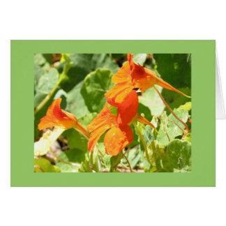 Stinson Nasturtiums Card