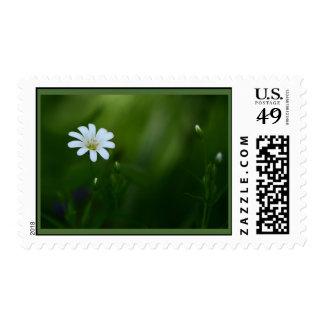 Stitchwort Postage