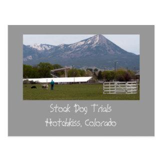 Stock Dog Trials, Hotchkiss, Colorado Postcard