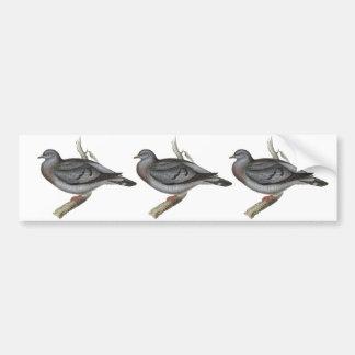 Stock Dove Bumper Sticker