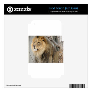 Stoic Lion Looking Off into the Distance iPod Touch 4G Skins