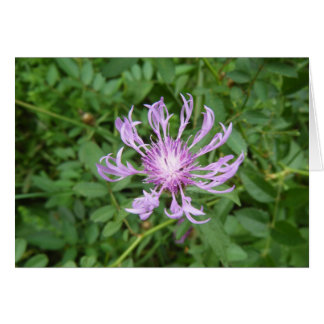 Stokes Aster Card