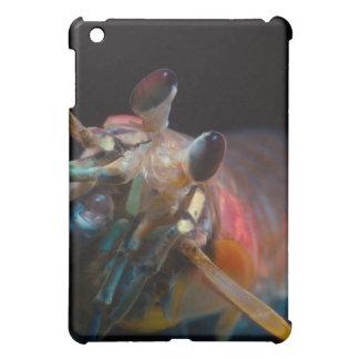 Stomatopod (camarón de predicador)