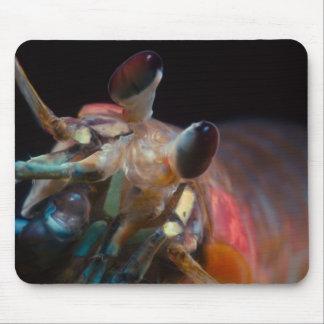 Stomatopod (camarón de predicador) mousepad