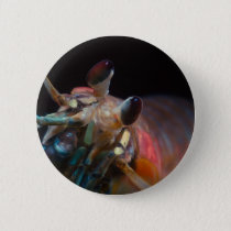 Stomatopod (Mantis Shrimp) Button