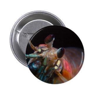 Stomatopod (Mantis Shrimp) Button