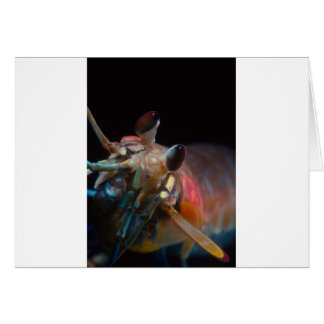 Stomatopod (Mantis Shrimp) Card