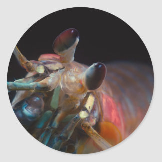 Stomatopod (Mantis Shrimp) Classic Round Sticker