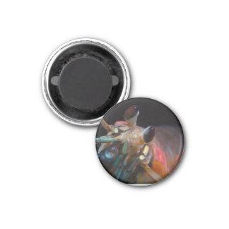 Stomatopod (Mantis Shrimp) Magnet