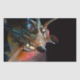 Stomatopod (Mantis Shrimp) Rectangular Sticker