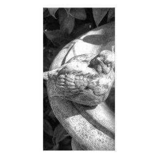 Stone Bird Fountain Photo Card Template