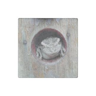 Stone Frog Magnet Stone Magnet