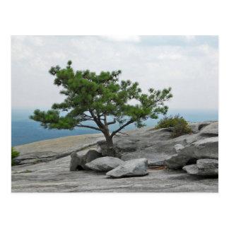 Stone Mountain Tree Stone Mountain Georgia 2 Postcard