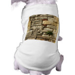 Stone Wall. With small plant. Dog Clothing