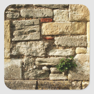 Stone Wall. With small plant. Square Sticker