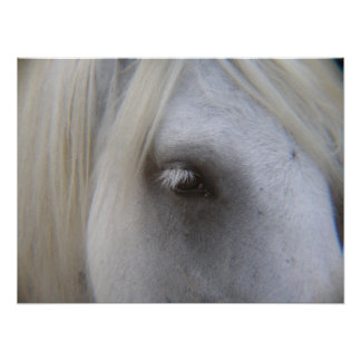 Stonecreek Farm Fell Ponies - Alyssum-Eye of Horse Poster