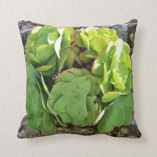 Stonecrop Succulent. Throw Pillow