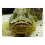 Stonefish Felicitacion