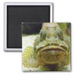 Stonefish Imán De Nevera