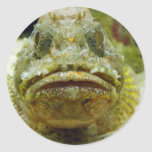 Stonefish Pegatina Redonda