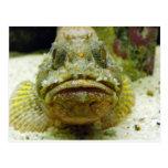Stonefish Postales
