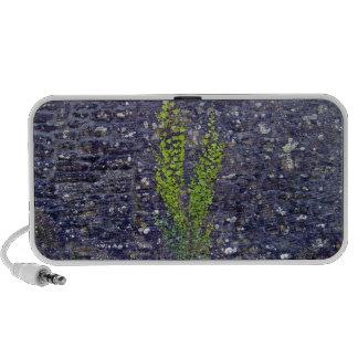 Stonewall con las plantas que suben iPod altavoz