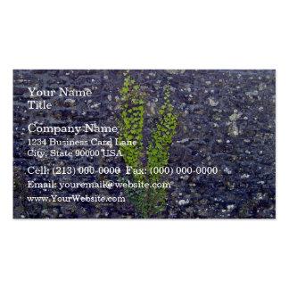 Stonewall con las plantas que suben tarjetas de negocios