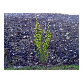 Stonewall con las plantas que suben postales