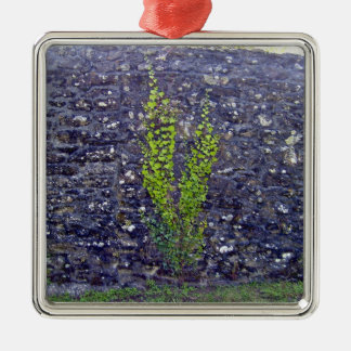 Stonewall with climbing plants ornament