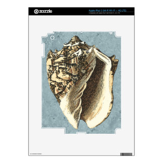 Stonewashed Conch Shell iPad 3 Decal