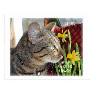 Stop and Smell the Flowers Post Card