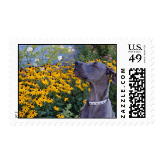 Stop and Smell the Flowers Postage Stamp