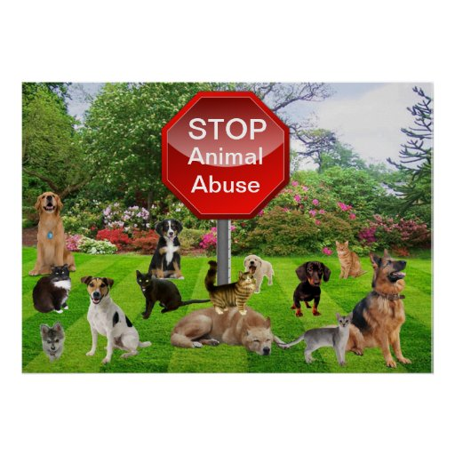 the gallery for gt stop farm animal cruelty