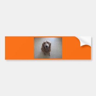 Stop Animal Cruelty Car Bumper Sticker