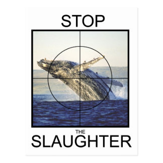 Stop Slaughter-whales Postcard