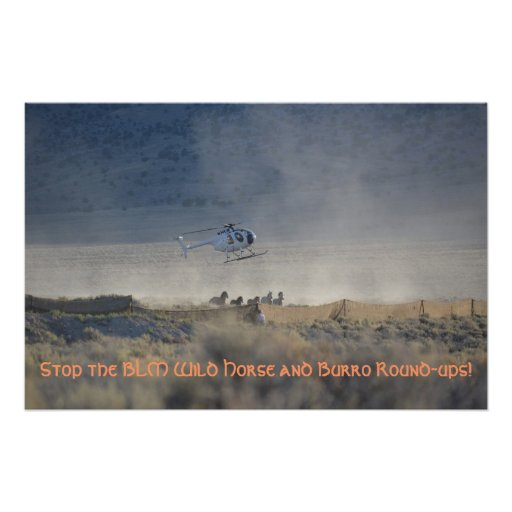Stop the BLM Wild Horse and Burro Round-ups Posters
