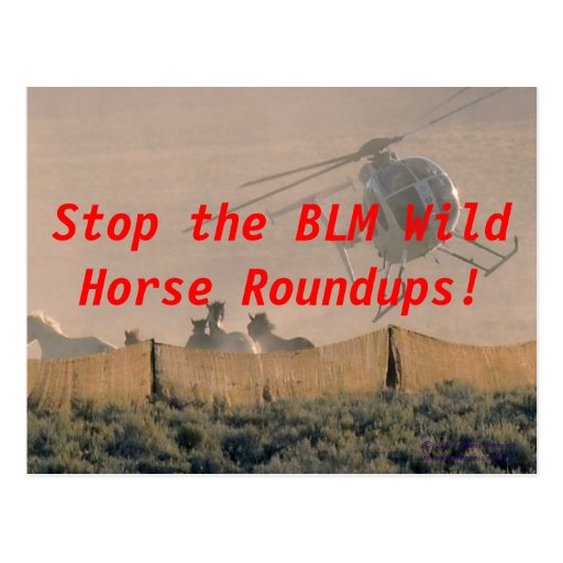 STOP THE ROUNDUP POST CARD
