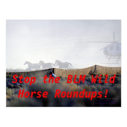 STOP THE ROUNDUPS President Obama! Postcards
