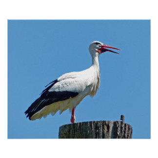 Stork with blue sky (Storch) Poster