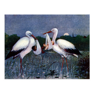 Storks at Marshy Rest Stop with New Babies Postcard