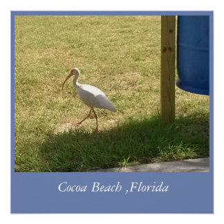 Storks of Cocoa Beach ,Florida Poster