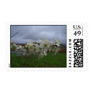 Storm Blossoms Stamps