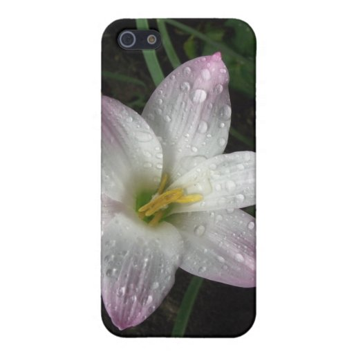 Storm Lilly iPhone 5/5S Cover
