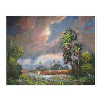 Stormy Florida Backwoods Postcard