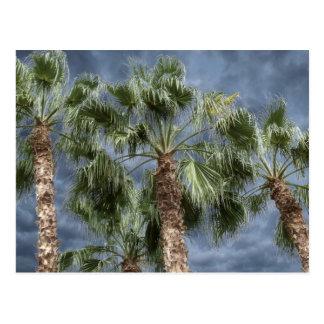 Stormy Sky Palm Trees Postcard